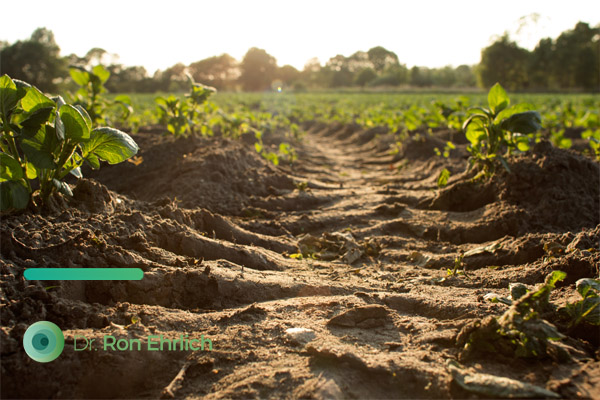healthy_soil_dr_ron_ehrlich