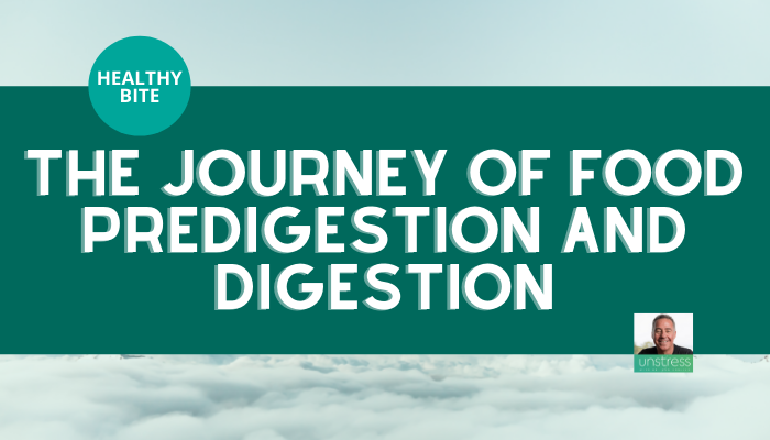 HEALTHY BITE The Journey of Food Predigestion and Digestion